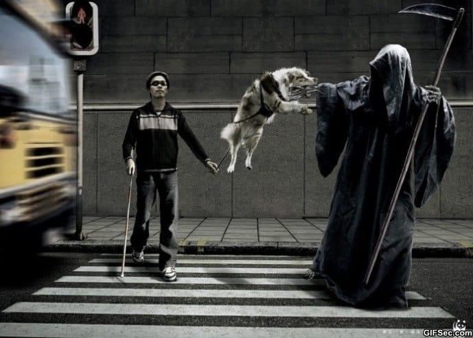 awesome-dog