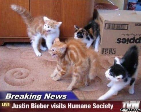 cats-vs-bieber