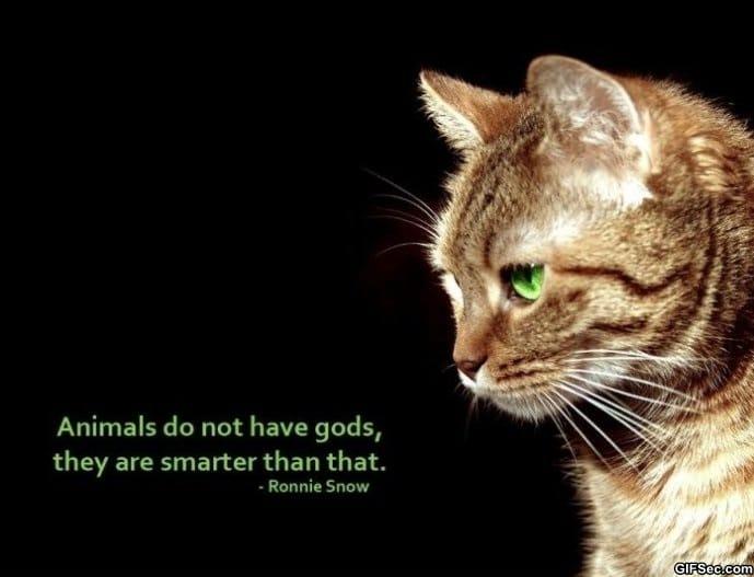 lucky-animals