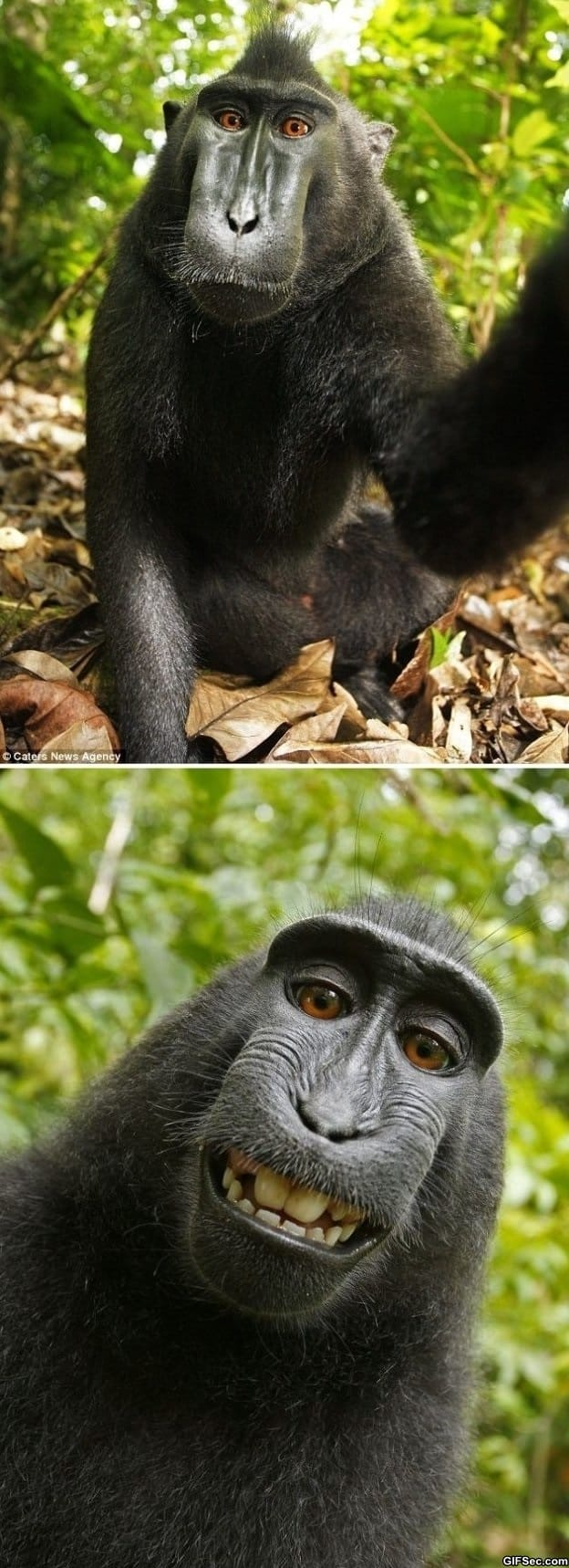 monkey-borrows-photographers-camera-to-take-self-portraits