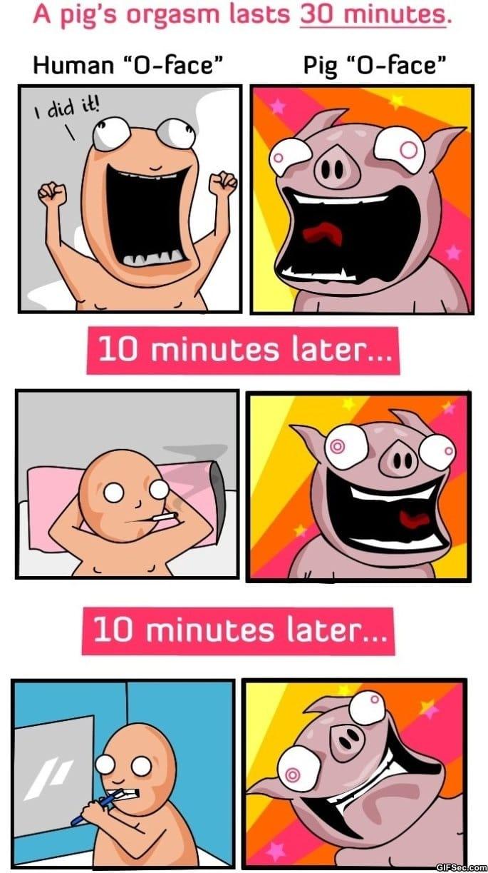pig-orgasms