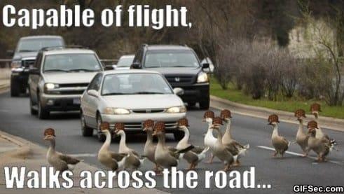 scumbag-geese