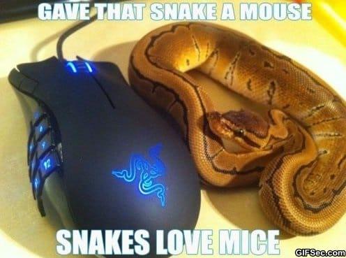 snakes-love-mice