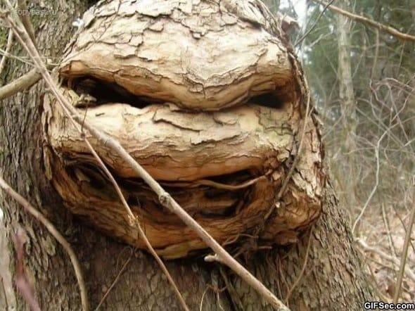 teenage-mutant-ninja-tree