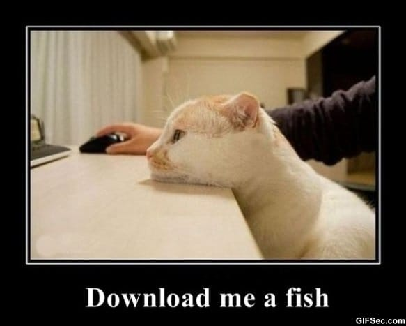 the-fish