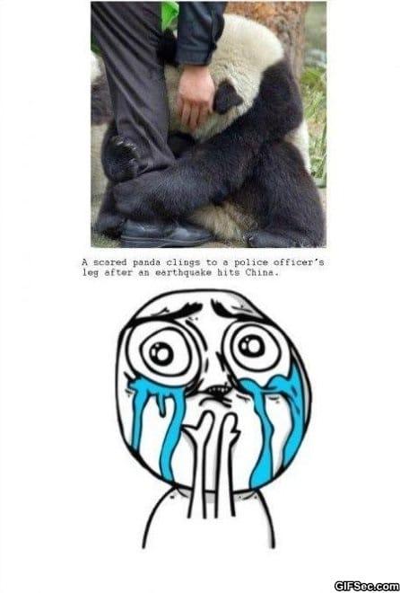 the-panda