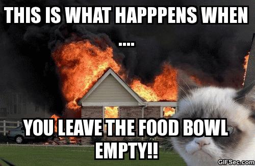 Grumpy Cat BURNS!!