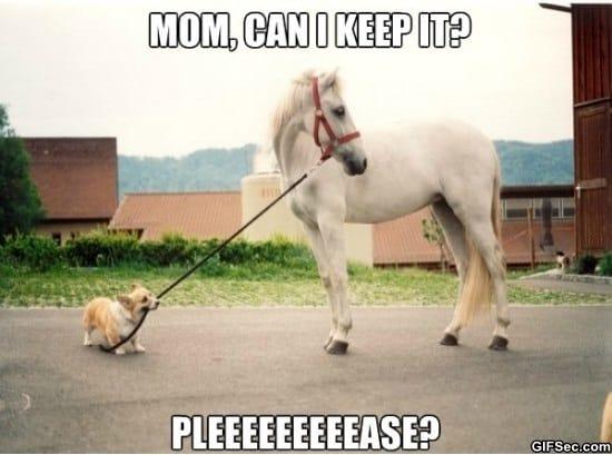 pleaseeeee-funny-pictures-meme-gif
