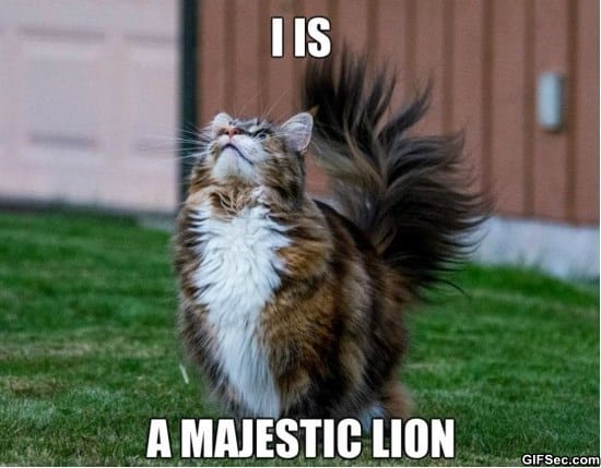 majestic-kitteh-meme-funny-pictures
