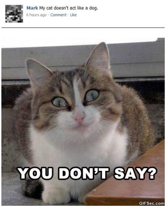 you-dont-say-funny-pictures