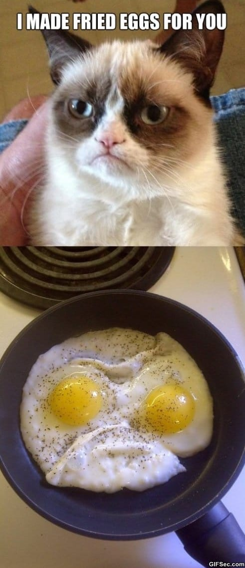 grumpy-eggs-funny-pictures