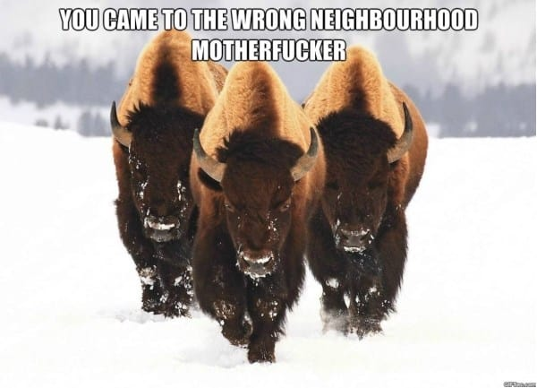 funny-image-wrong-neighbourhood-memes