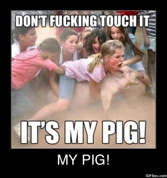 my-pig-funny-pictures
