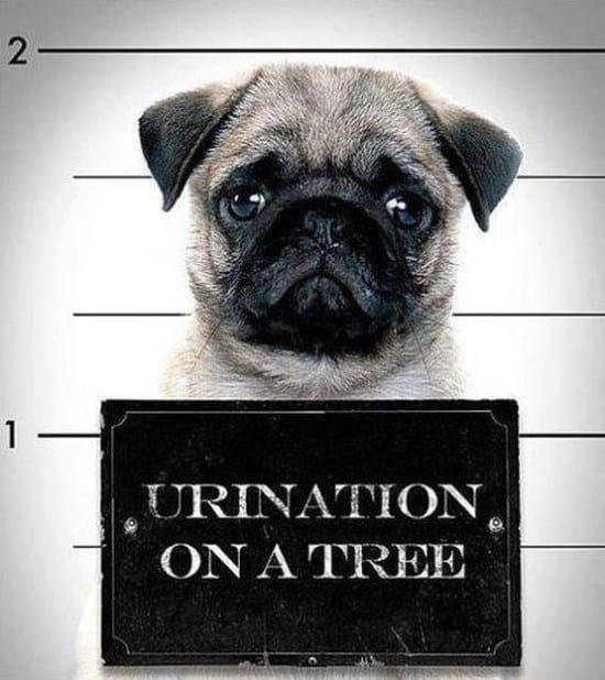 criminal-dog