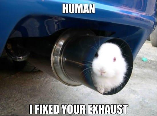 engineer-rabbit