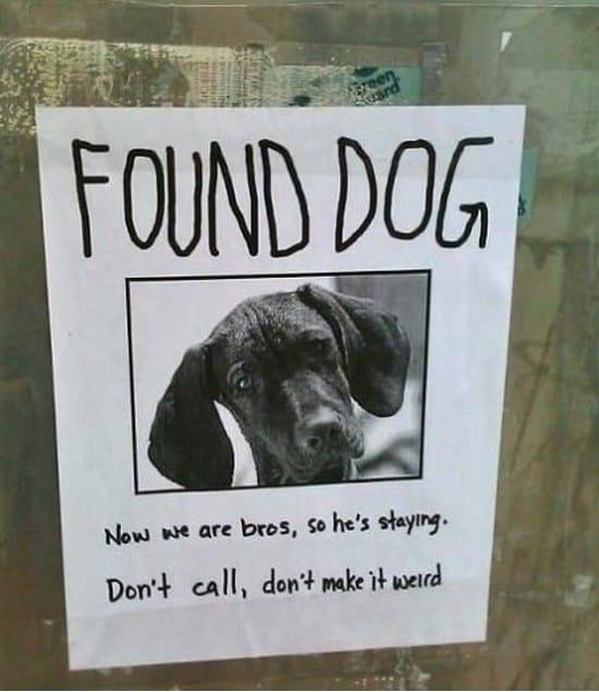 found-dog