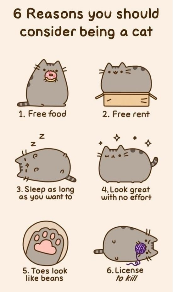 reasons-you-should-consider-being-a-cat