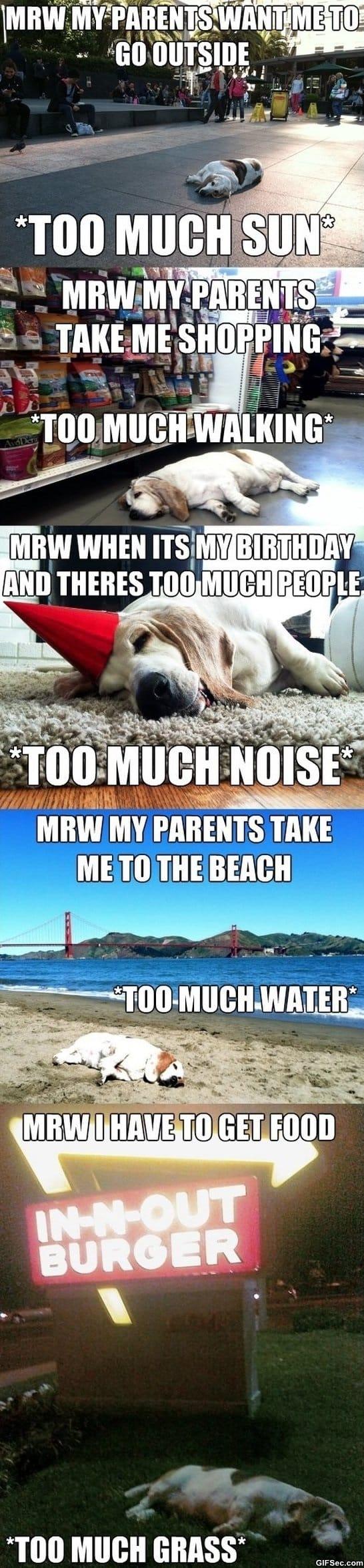 funny-pics-struggles-meme