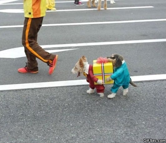 best-dog-costume-ever