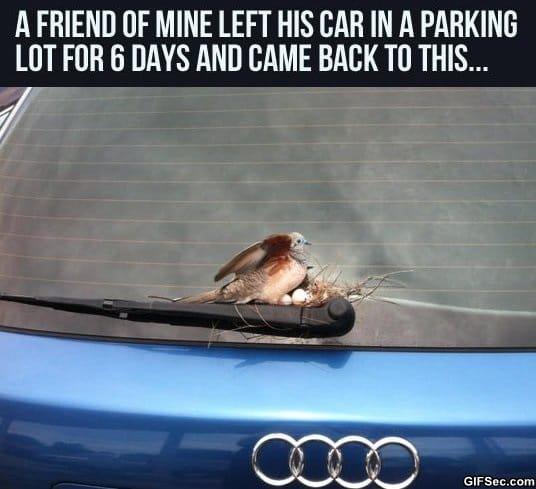 brave-bird