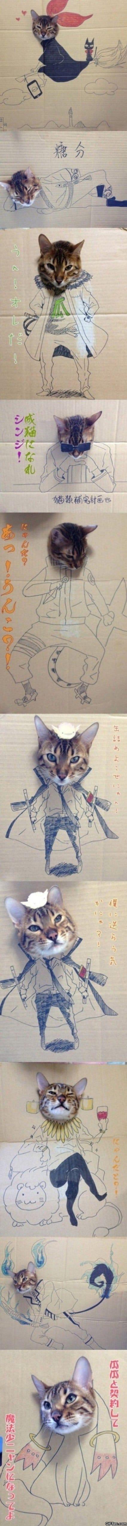 cat-adventures