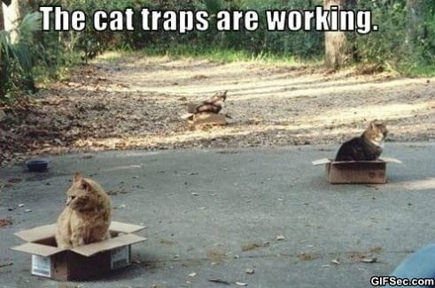 cat-traps