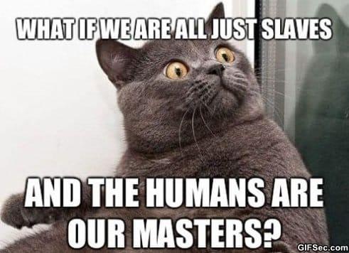 cat-mind-blown