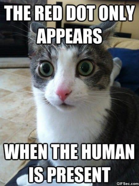 clarity-cat
