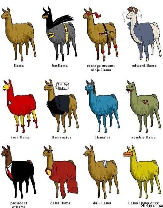 different-types-of-llamas