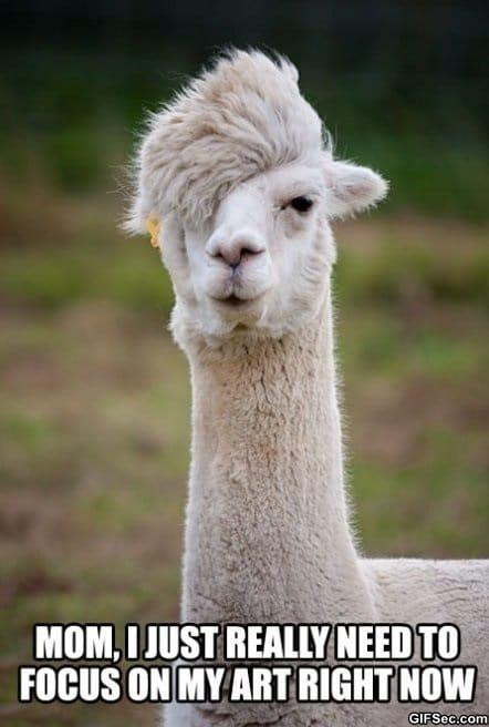 emo-alpaca