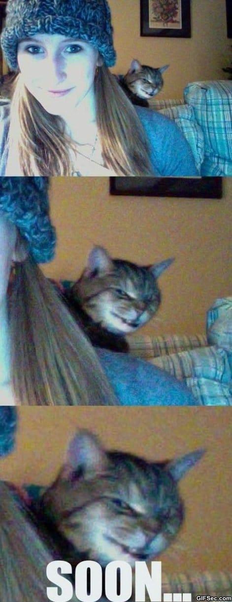evil-cat-photobomb
