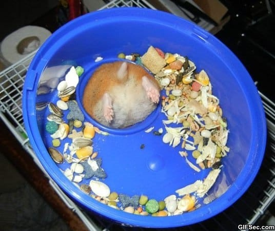 first-world-hamster-problems