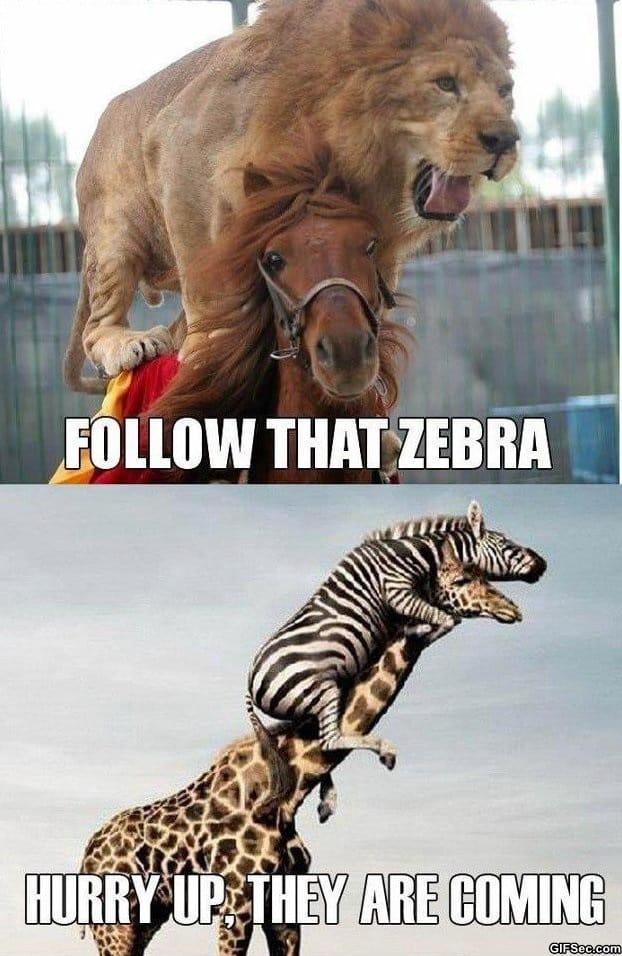 follow-that-zebra