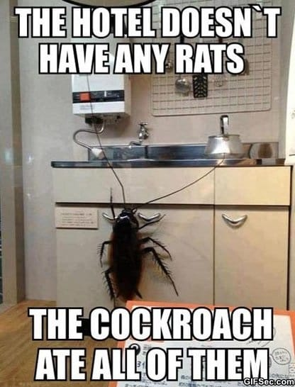 funny-cockroach-meme