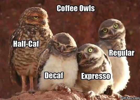 funny-coffee-owls