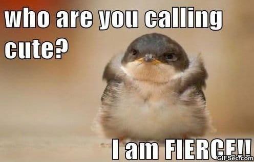 funny-cute