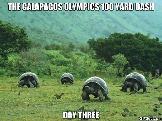 funny-galapagos-olympics