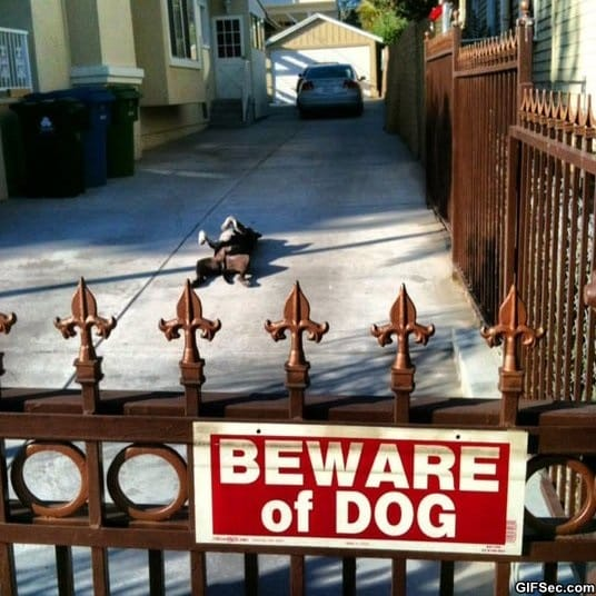funny-i-forgot-how-to-guard-dog