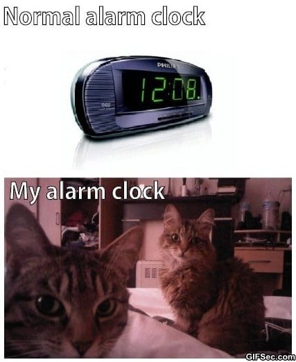 funny-my-alarm-clock