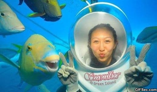 funny-photogenic-fish