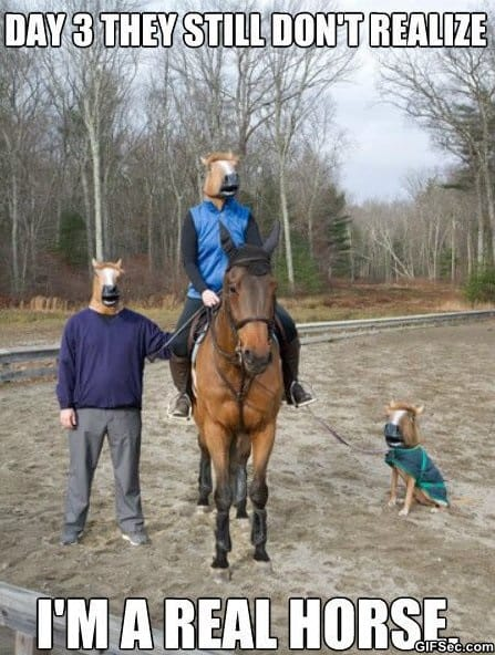 funny-poor-horse