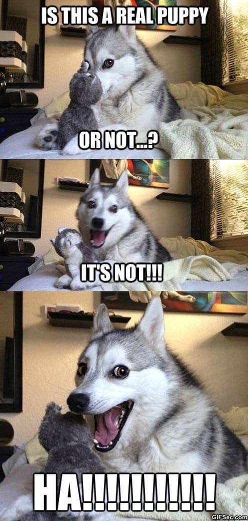 funny-puppy