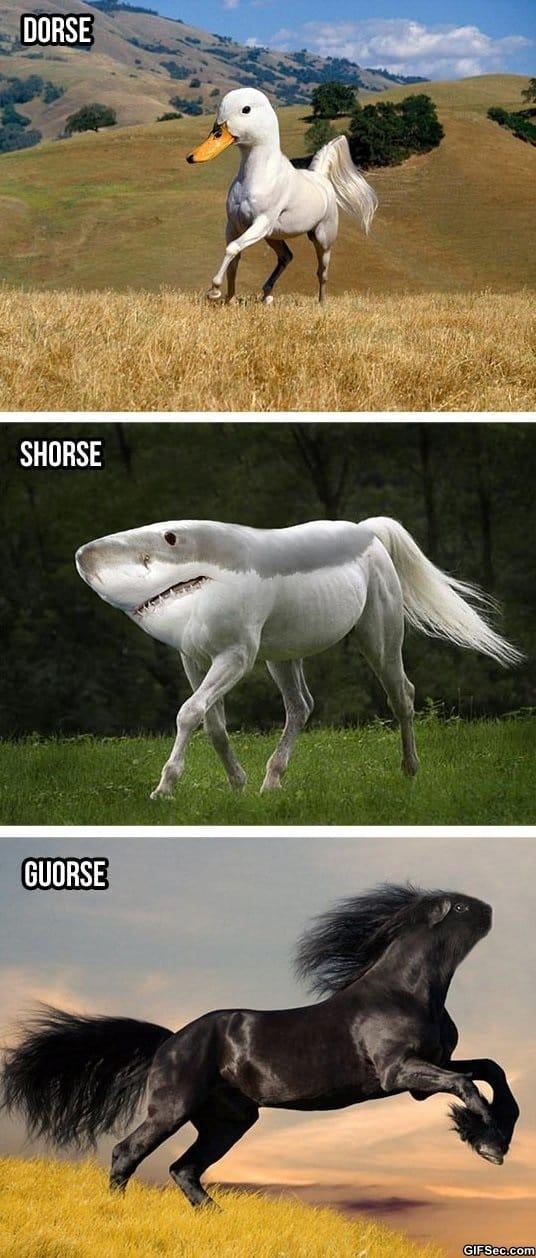 funny-silly-horses