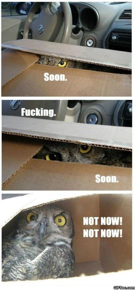 funny-soon
