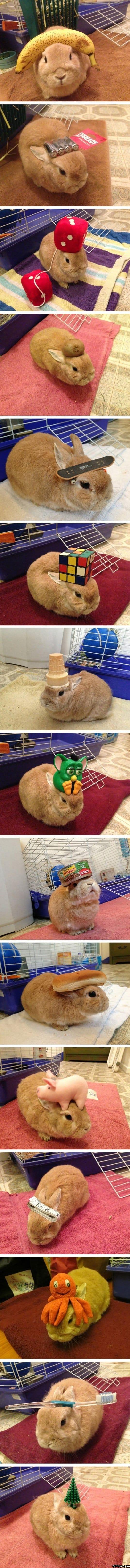 funny-stuff-on-my-rabbit