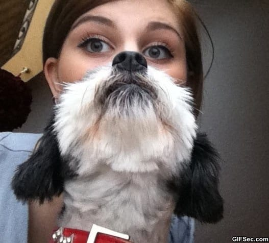 funny-the-majestic-dog-beard