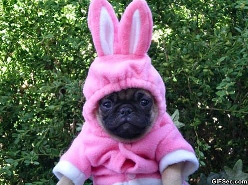 funny-pictures-bunny-puppy-is-not-amused