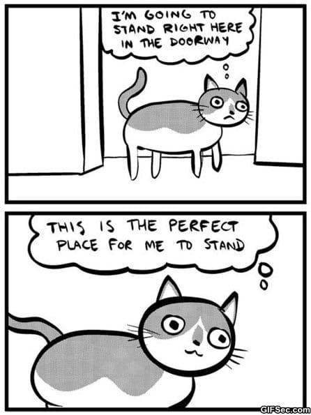 funny-pictures-cat-logic