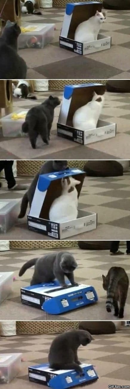 funny-pictures-cats-are-jerks