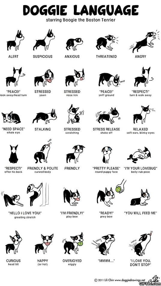 funny-pictures-doggie-language